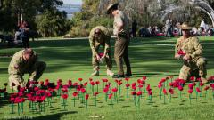 Planting of the knitted Red Poppies 2018