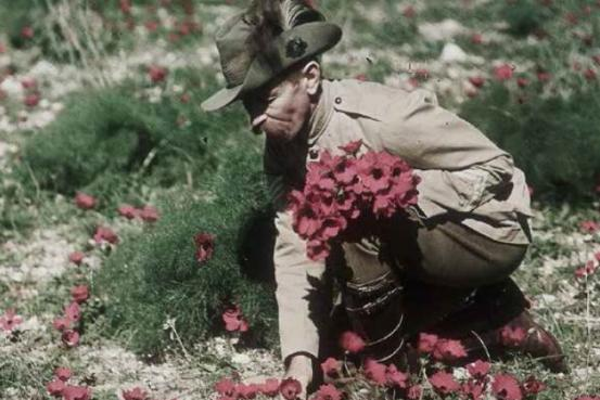 Soldier collecting poppies